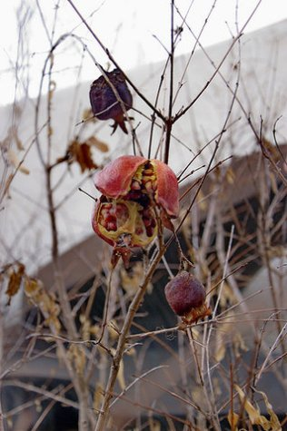 blood fruits